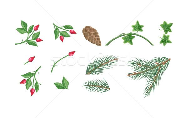 Set of Christmas Decoration Plants Illustrations  Stock photo © robuart