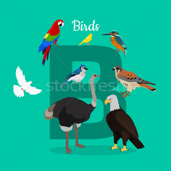 Birds with Letter B Isolated. ABC, Alphabet. Stock photo © robuart
