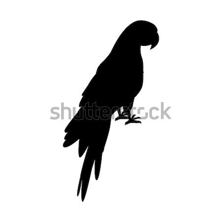 Papagáj terv vektor madarak amazóniai fekete Stock fotó © robuart