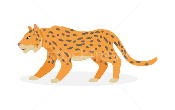 Jaguar, Wild Cat Panther Isolated on White. Stock photo © robuart