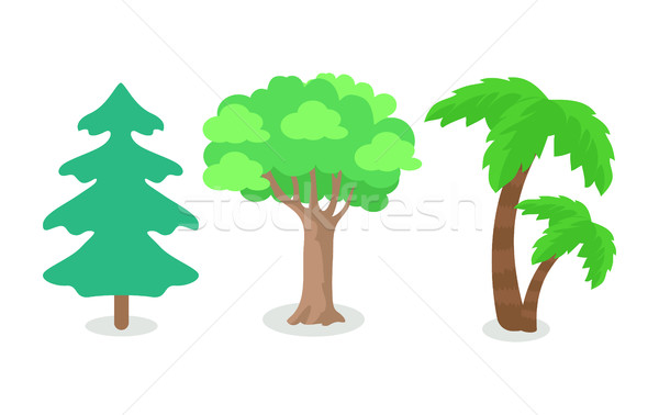 Trees of Different Continental Zone Isolated Stock photo © robuart