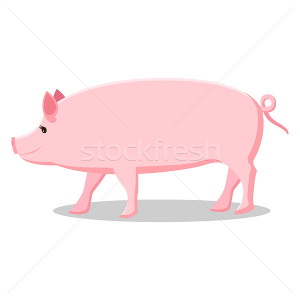 Pink Pig with Curly Tail Isolated Illustration Stock photo © robuart