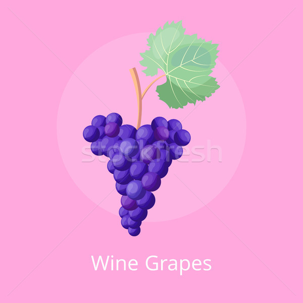 Wine Grapes Icon, Vector Illustration on Pink Stock photo © robuart