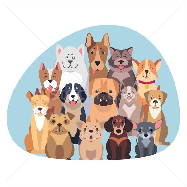 Fajtiszta kutyák ül néz hegy központi Stock fotó © robuart
