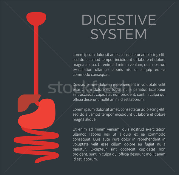Digestive System Black Poster Vector Illustration Stock photo © robuart