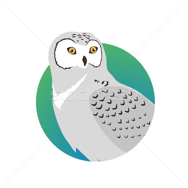 Uil ontwerp vector vogels wildlife stijl Stockfoto © robuart