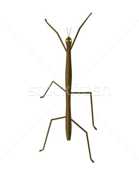 Palo insectos icono fantasma insectos caminando Foto stock © robuart