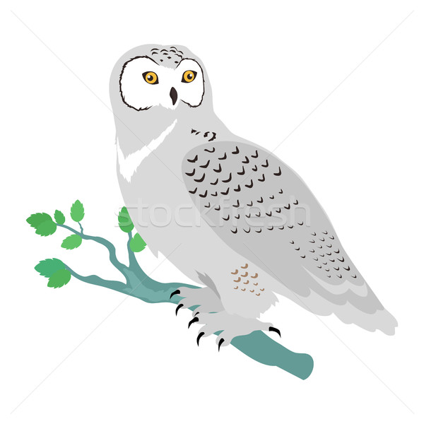Snowy Owl Flat Design Vector Illustration Stock photo © robuart
