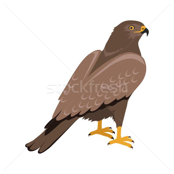 Hawk Flat Design Vector Illustration Stock photo © robuart