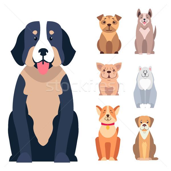 Cute Purebred Dogs Cartoon Flat Vectors Icons Set Stock photo © robuart