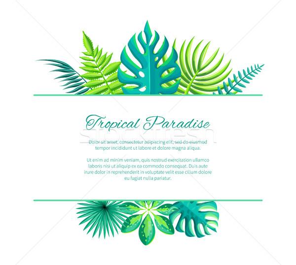 Trópusi édenkert hirdetés poszter szöveg hely Stock fotó © robuart