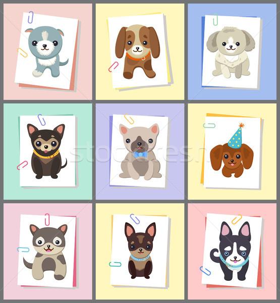 Cuccioli cani poster set raccolta animali Foto d'archivio © robuart