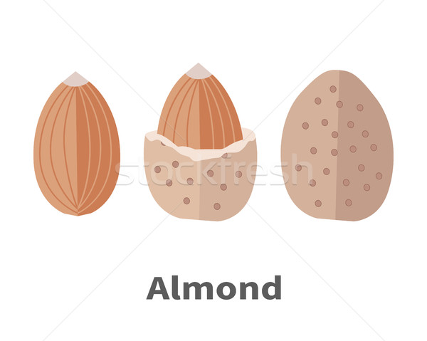 Almond Nuts Vector Illustration in Flat Design Stock photo © robuart