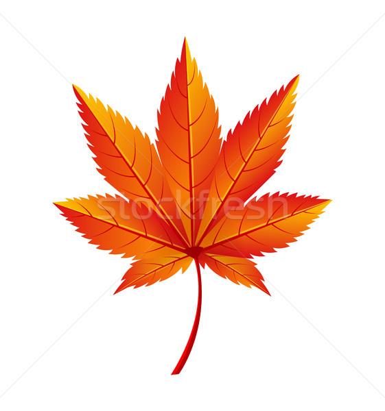 Autumn Golden Yellow Leaf Vector Illustration Icon Stock photo © robuart