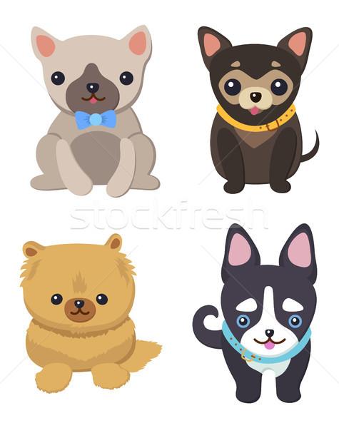Сток-фото: набор · фотографий · Cute · собаки · серый · черный