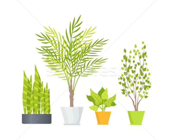 Indoor Floor Plants in Pots Isolated Illustrations Stock photo © robuart