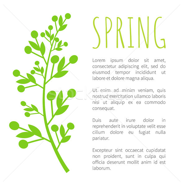 Spring and Weed Grass on Poster with Sample Text Stock photo © robuart