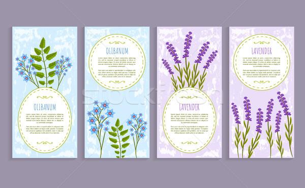 Olibanum and Lavender Cover Vector Illustration Stock photo © robuart
