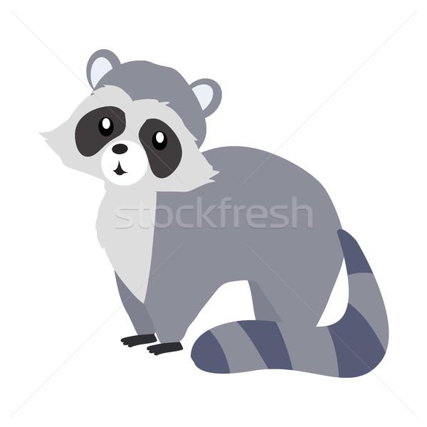 Funny Raccoon Sitting Stock photo © robuart