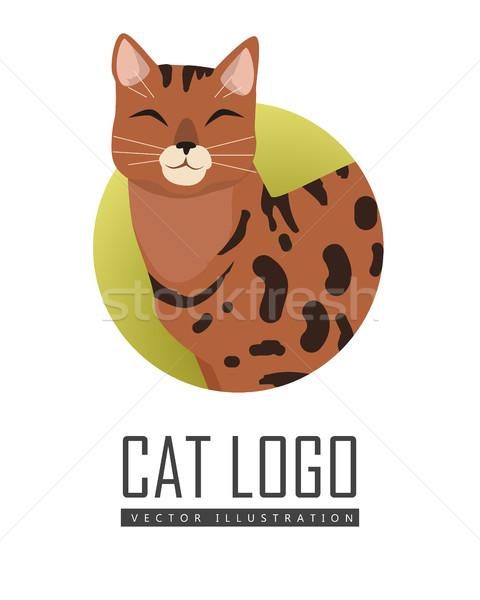 Bengalski kot wektora projektu ilustracja Zdjęcia stock © robuart