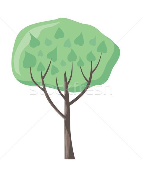 Vektör ağaç yeşil yaprakları yeşil şık bitki Stok fotoğraf © robuart
