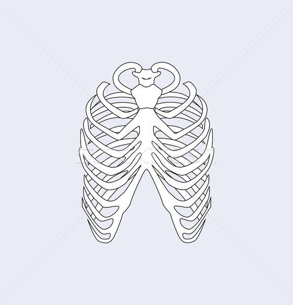 Ossos costelas branco humanismo corpo Foto stock © robuart