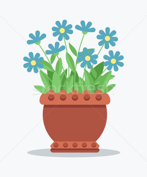 Maison usine tendre bleu fleur argile Photo stock © robuart