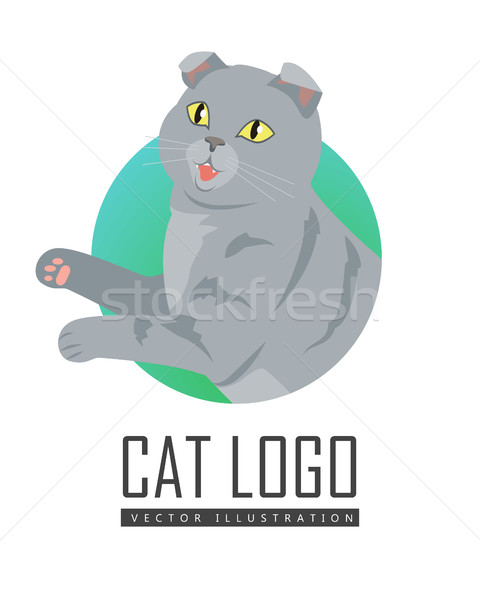 Cute grigio cat giocare giocattolo isolato Foto d'archivio © robuart