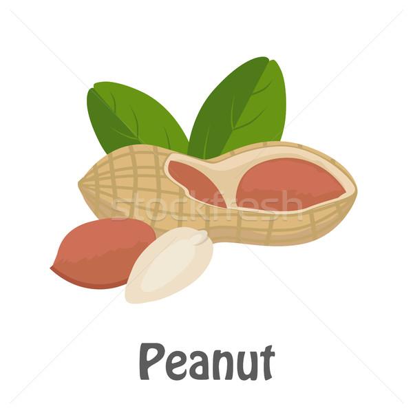 Ilustração amendoim maduro folhas branco vários Foto stock © robuart