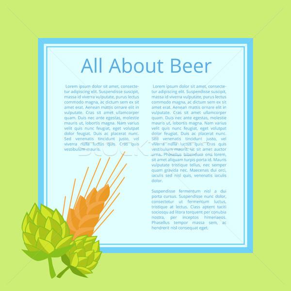 ビール ポスター キャベツ 小麦 耳 ストックフォト © robuart