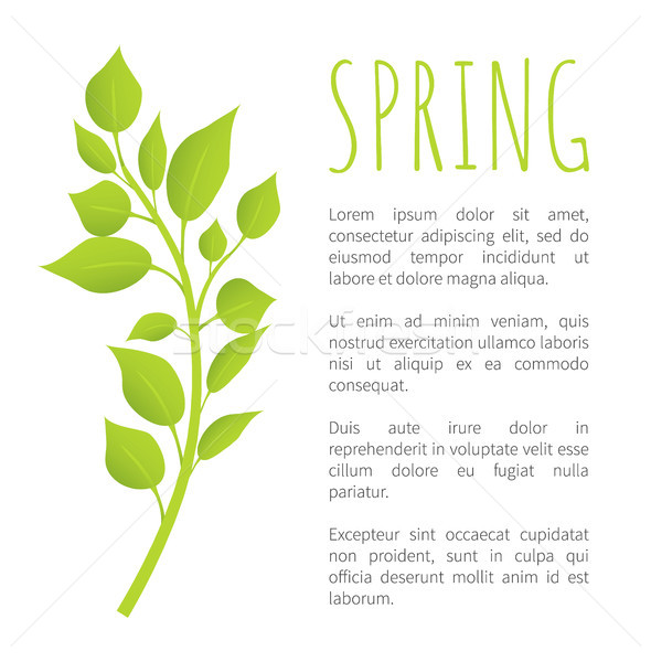 Spring Birch Brunch with Green Leaves Poster Text Stock photo © robuart