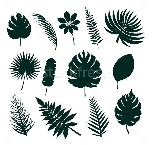 Leaves Silhouette Collection Vector Illustration Stock photo © robuart