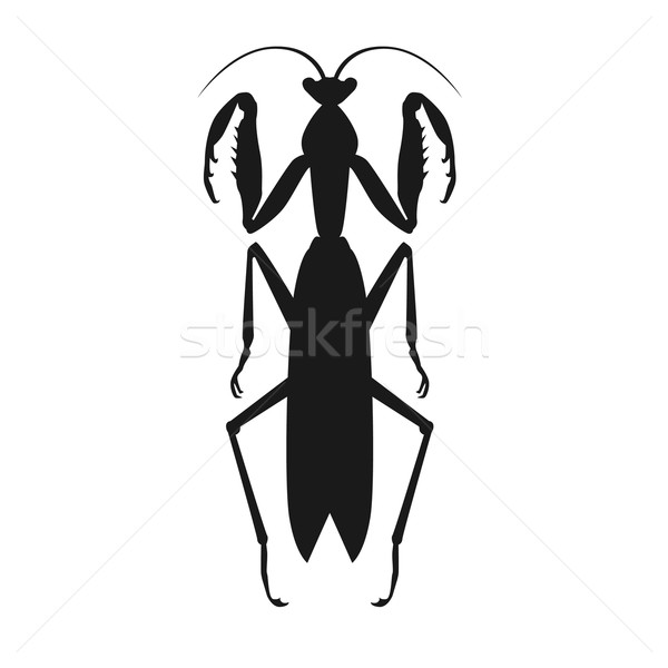 Negro saltamontes icono naturaleza Cartoon cute Foto stock © robuart