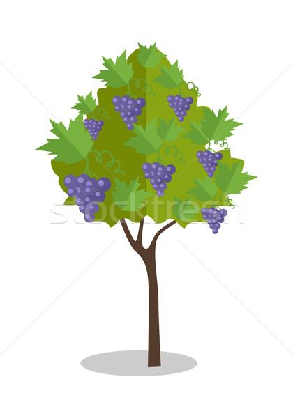 Pourpre raisins suspendu Bush vignoble icône Photo stock © robuart