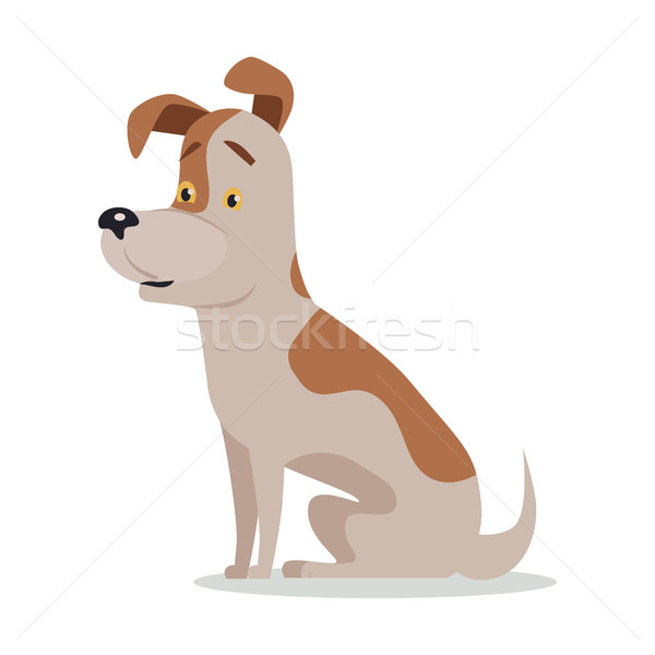 Jack Russell Terrier Dog Breed Isolated on White Stock photo © robuart