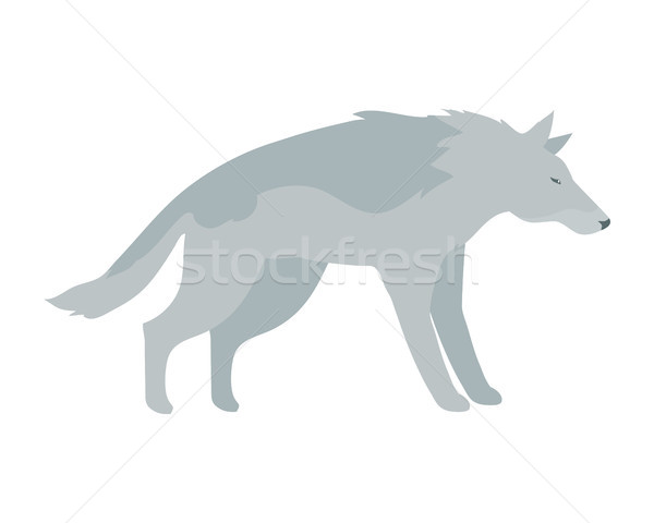 Wolf Vector Illustration in Flat Design Stock photo © robuart