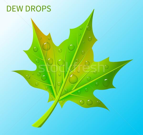 Dew Tropfen green leaf isoliert hellblau transparent Stock foto © robuart