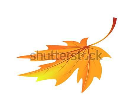 Autumn Golden Yellow Leaf Vector Illustration Stock photo © robuart