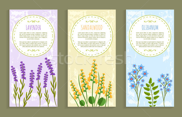 Lavender and Olibanum Set Vector Illustration Stock photo © robuart