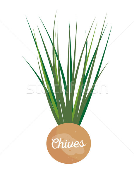 Chives Label with Lettering Vector Illustration Stock photo © robuart