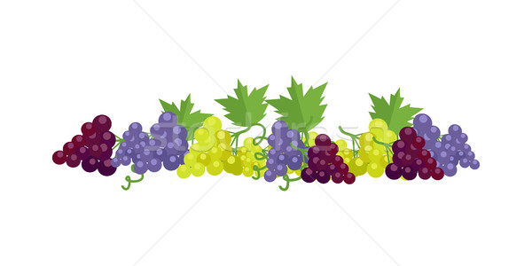 Bunches of Wine Grapes Stock photo © robuart