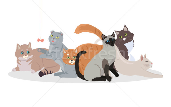 Cat Breeds Cute Pet Animal Set Vector Web Banner. Stock photo © robuart