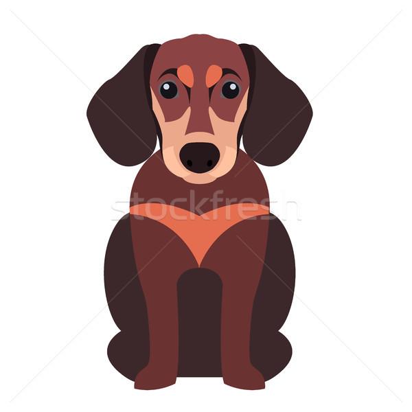 Stock fotó: Aranyos · tacskó · kutya · rajz · vektor · ikon