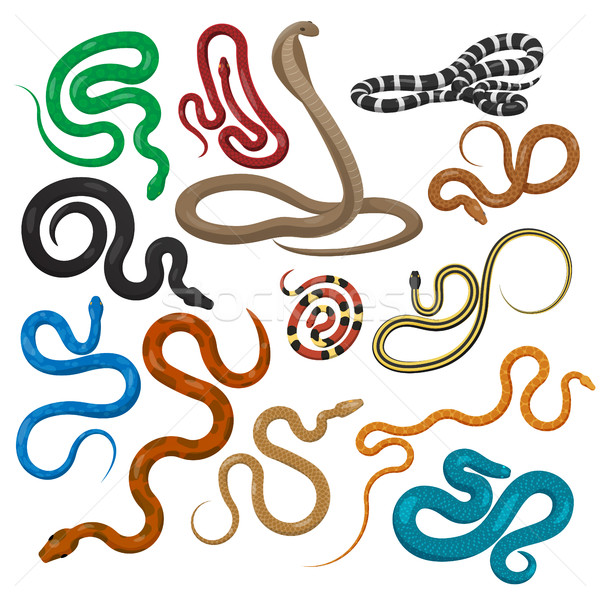 Snake Set Isolated. Elongated, Legless Reptiles. Stock photo © robuart