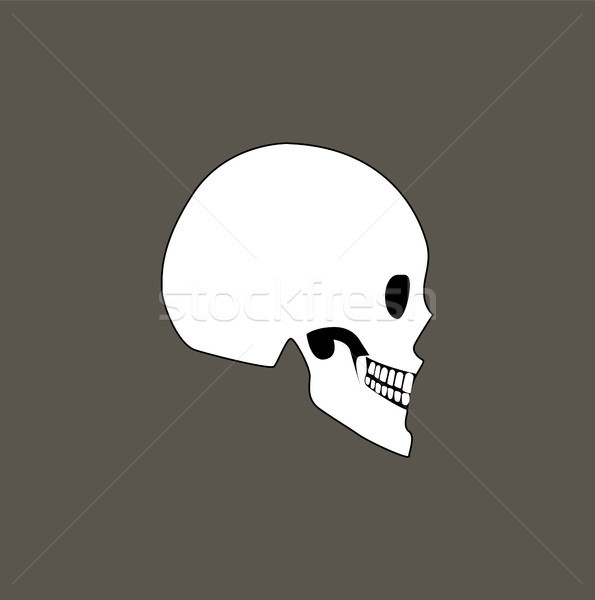 Skull of Human Profile View Vector Illustration Stock photo © robuart