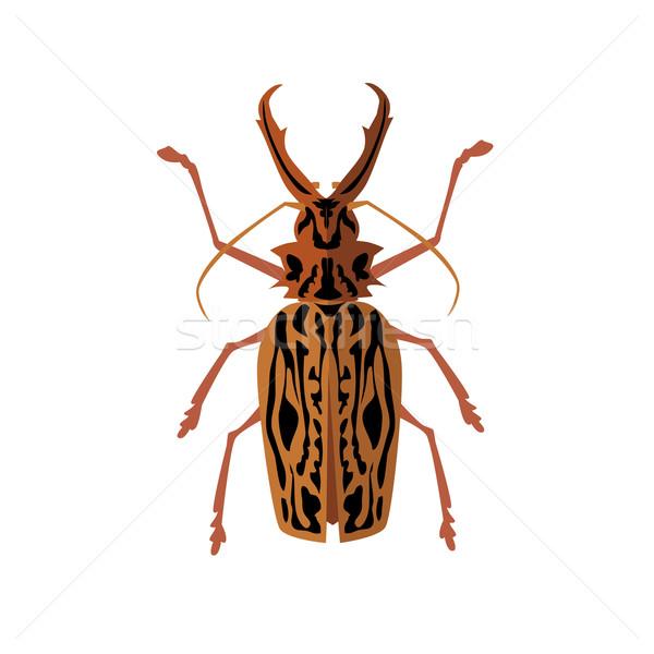 ビッグ カブトムシ 鹿 アイコン 科学 ストックフォト © robuart