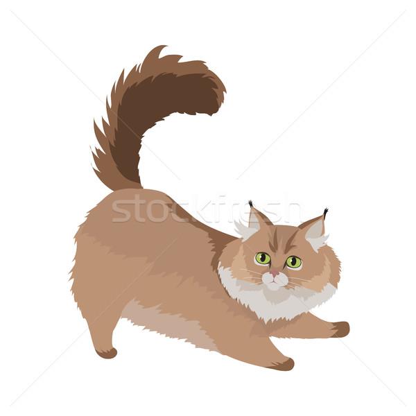 Macska vektor terv illusztráció fajta aranyos Stock fotó © robuart