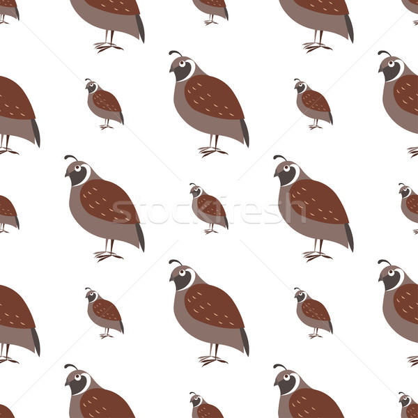 Cartoon Quail Seamless Pattern on White Vector Stock photo © robuart