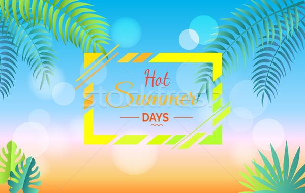 Forró nyári napok promóciós poszter levelek zöld Stock fotó © robuart