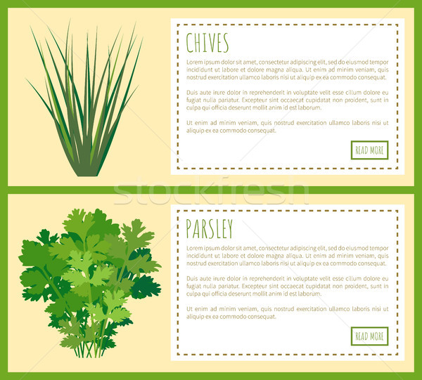 Chives and Parsley Greenery, Food Condiments Set Stock photo © robuart